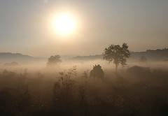 Corbett Morning 2 - eileendelhi
